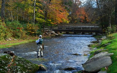 Tight Lines: Fishing at Elk River Club